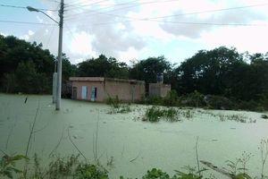 Abandonan viviendas en Cobá