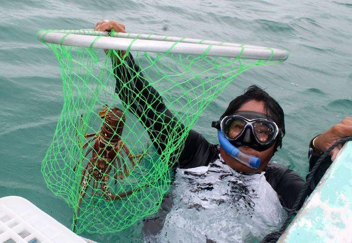 La pesca es una de las actividades que crece en el estado. (Redacción/SIPSE)