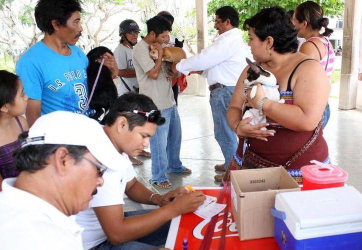 La Semana Nacional de Vacunación Antirrábica será del 10 al 16 de marzo. (Cortesía/SIPSE)