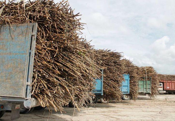 Existen alrededor de 60 camiones cañeros a la espera de poder ingresar al batey. (Edgardo Rodríguez/SIPSE)