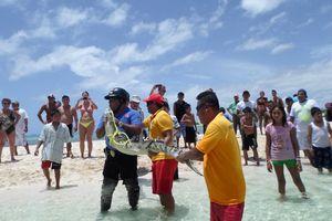 Capturan a un cocodrilo en una playa pública de Solidaridad