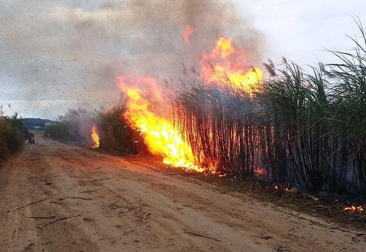 Las tareas de la zafra arrancan con la quema del cañaveral. (Edgardo Rodríguez/SIPSE)