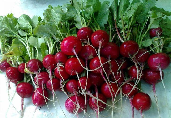 Entre rábanos, lechuga y otras hortalizas, tres campesinos distribuían droga en Kanasín. (SIPSE)