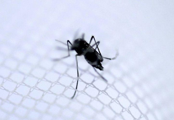 El Zika es transmitido por el mismo mosquito del dengue y el chikungunya .(Archivo/EFE)