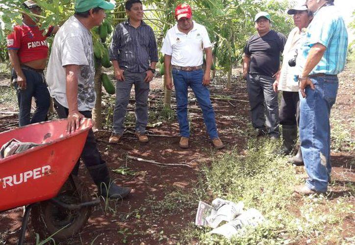 Los ejidatarios señalaron que las lluvias originaron pérdidas en el campo. (Raúl Balam/SIPSE)