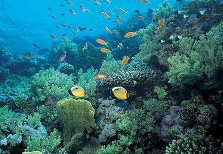 El Festival de los Océanos tiene el objetivo de incentivar la cultura de protección del medio ambiente. (Contexto/Internet)