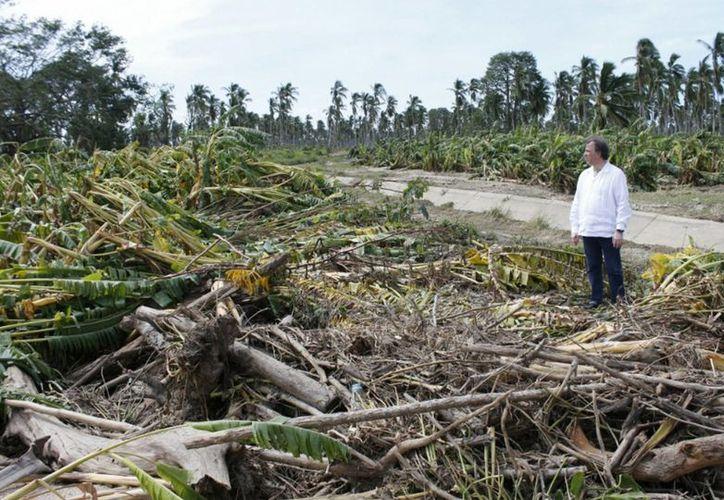 El secretario de Desarrollo Social, José Antonio Meade Kuribreña, al realizar una gira de trabajo por los estados de Colima y Jalisco donde visitó las zonas y comunidades afectadas por el huracán 'Patricia'. (Notimex)