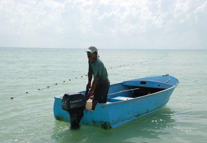 Con el levantamiento de la veda, fue programada la captura de entre 200 y 250 toneladas del marisco. (Archivo/SIPSE)