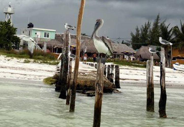 Se determinarán los lugares de anidación y descanso de las aves playeras de Quintana Roo. (Tomás Álvarez/SIPSE)