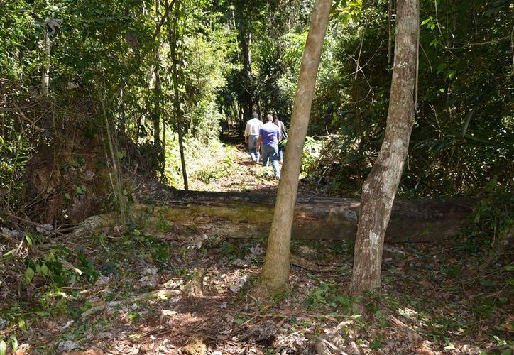 Desarrollan una estrategia para reducir la reforestación. (Joel Zamora/SIPSE)