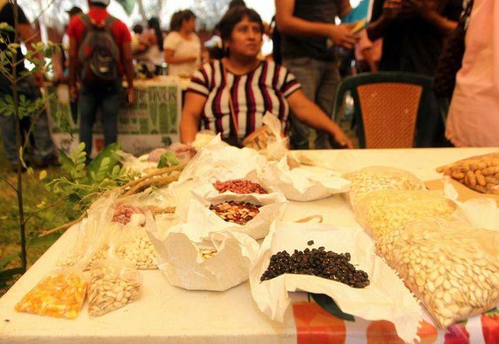 Piden privilegiar las semillas que no son modificadas genéticamente. (Amílcar Rodríguez/Milenio Novedades)