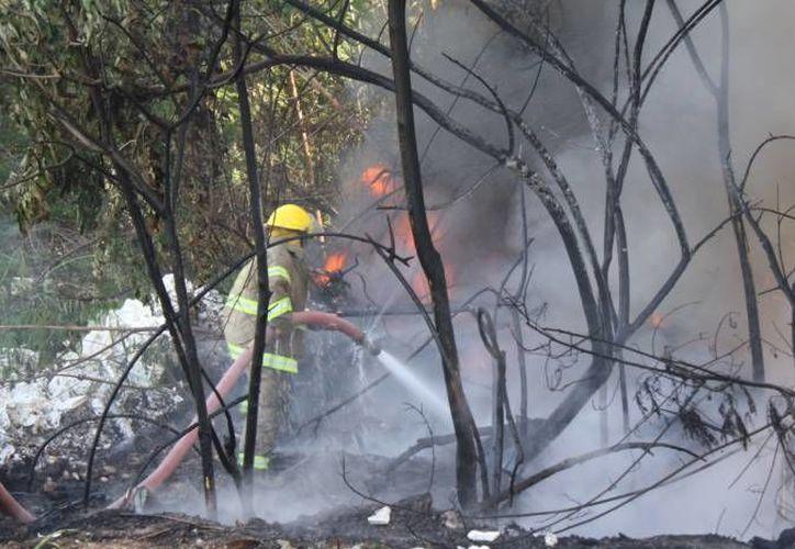 """El incendio """"El Zapotal"""", ubicado a cinco kilómetros al este de la comunidad de San Pablo, lleva 70 hectáreas consumidas. (Redacción/SIPSE)"""