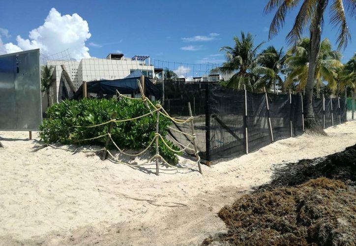 Uno afectaría a las tortugas y el otro se construiría en una playa erosionada. (Redacción)