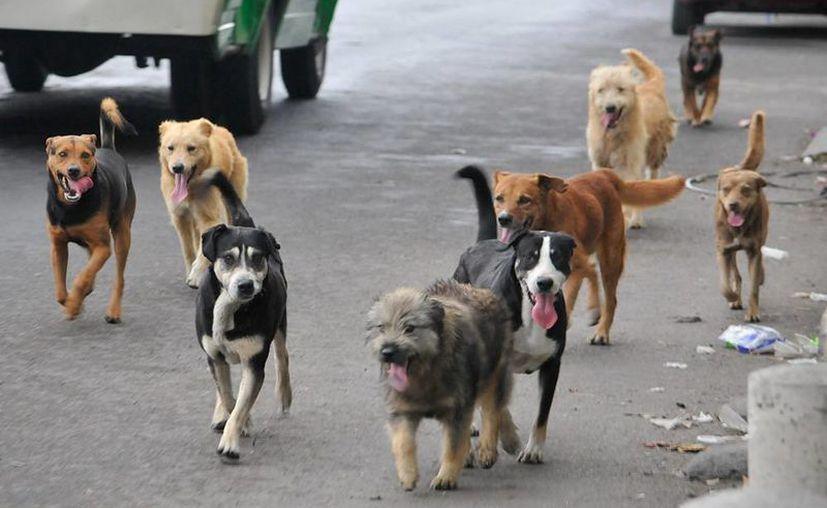 Los perros abandonados se han convertido en un problema en varias ciudades mexicanas. (excelsior.com)