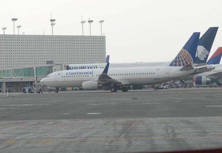 Un perro de la Policía Federal detectó la droga en una valija de un vuelo procedente de Colombia, en el Aeropuerto de la Ciudad de México. (cinu.org.mx)
