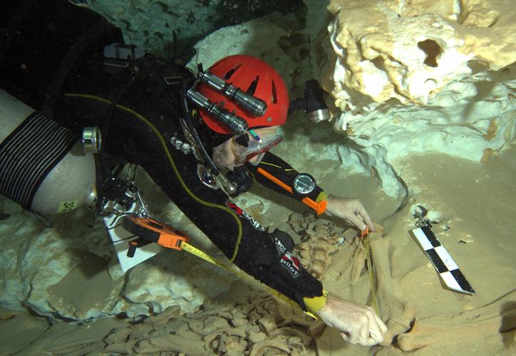 Esta especie se identificó por los fragmentos de un brazo hallado a 45 metros de profundidad, en el cenote Pit. (Cortesía: Jerónimo Avilés Olguín)
