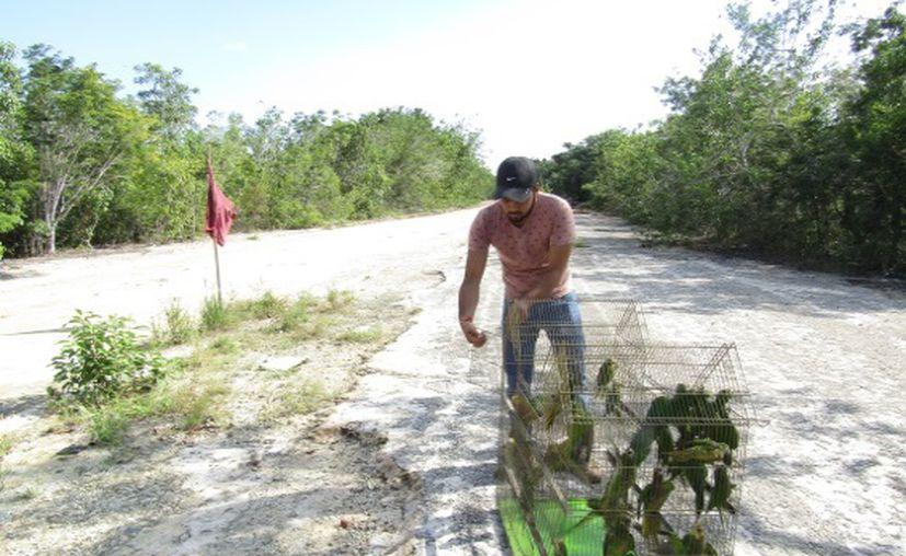 Cubiertos por bolsas negras fueron abandonados 28 loros silvestres  a la orilla del camino Escárcega-Chetumal. (Cortesía)