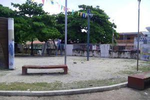 Levantan diagnóstico de árboles monumentales de Playa del Carmen