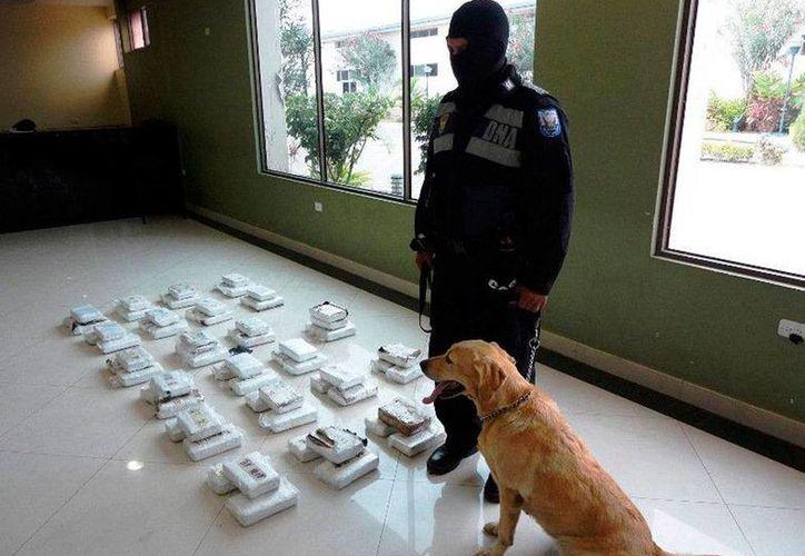 Agentes antinarcóticos hallaron cocaína líquida que estaba escondidida entre toneladas de pescado congelado. En la imagen, un agente custodia un cargamento de droga. (Imagen de contexto/archivo/lahora.com.ec)