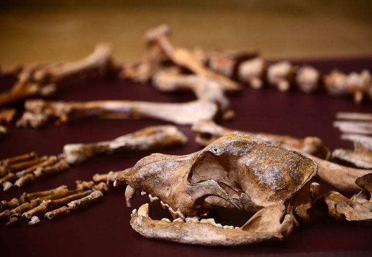 La muestra 'Iroqués: visión arqueológica de una antigua cultura de Quebec', abrirá al público el 13 de octubre en el Templo Mayor, en la Ciudad de México. (Notimex)