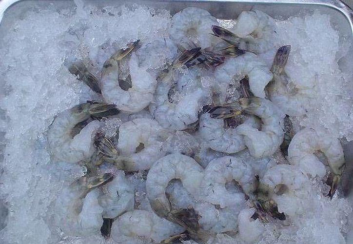 El punto de inspección de la Sagarpa en Chetumal, permitirá el acceso de productos marinos congelados, como el camarón.  (Foto de contexto/Internet)