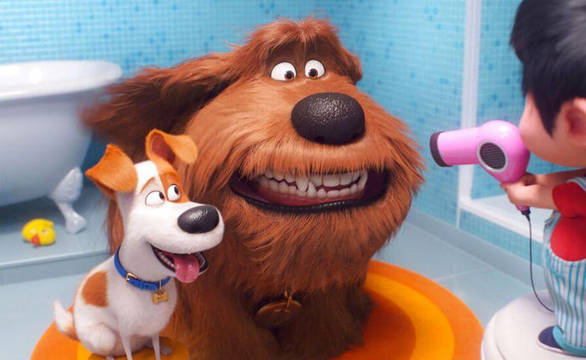 """La cinta de animación cuenta las aventuras de """"Max"""", quien se enfrenta a una serie de cambios. (Illumination Entertainment/Universal Pictures via AP, archivo)"""