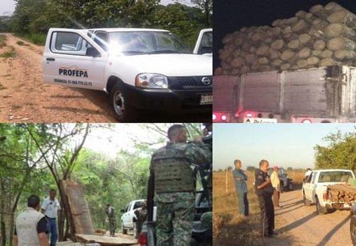 La Profepa realiza el operativo con el fin de detener el tráfico ilegal de madera en la Frontera Sur. (Cortesía/Profepa)