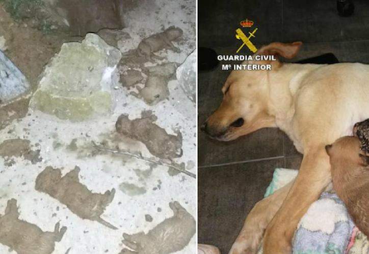 Los animales fueron trasladados a una clínica veterinaria de urgencias, donde se certificó la muerte de los siete cachorros. (Sin Embargo)