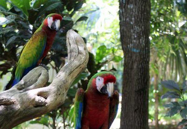 Las especies son liberadas en el Área Natural Protegida los Tuxtlas, en Veracruz. (Tomás Álvarez/SIPSE)
