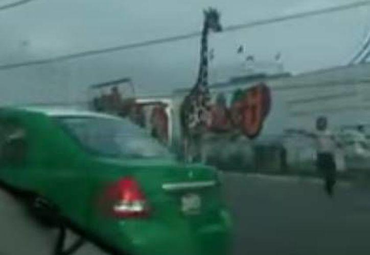 La jirafa se puso a correr por las calles de San Nicolás de los Garza en medio de las personas y los autos. (video de YouTube tomado de excelsior.com.mx)