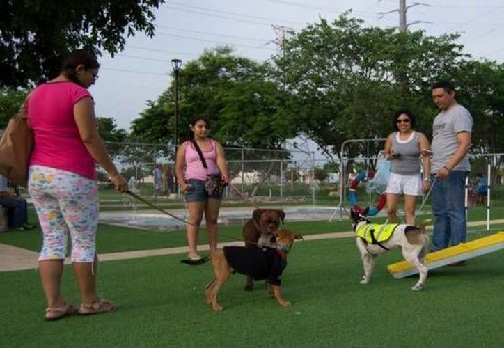 Este lunes dio inicio en el Paseo Verde vacunación antirrábica gratuita para perros y gatos. (twitter.com/search?q=paseo%20verde&src=typd)