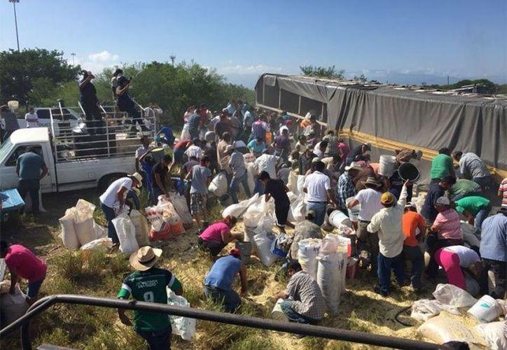 La gente comenzó a llevarse el maíz regado en cubetas, costales y carros, situación que se repite cada que se registra un accidente de este tipo. (Foto: El diario de Coahuila)