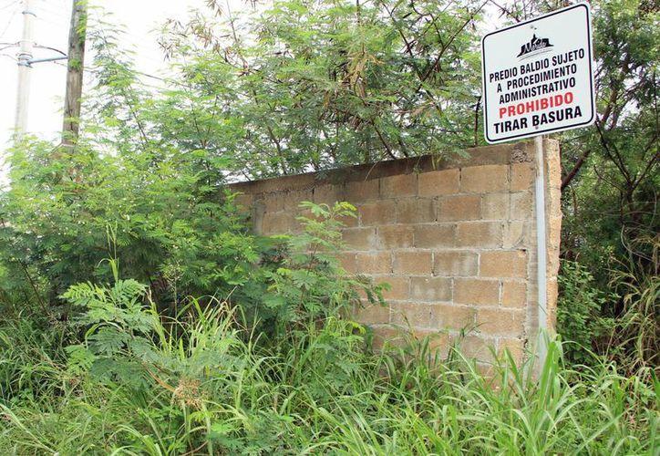 Se desconoce la cifra de predios baldíos que hay en Mérida. (Milenio Novedades)