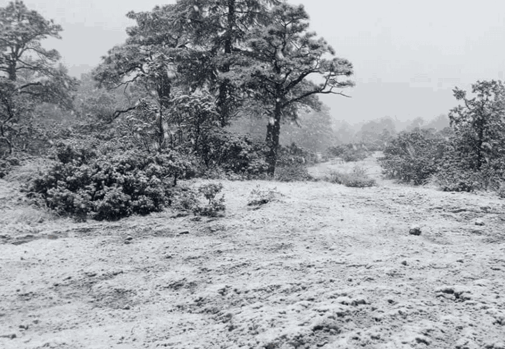 Las nevadas se reportan en los municipios de Bocoyna, Carichí, Guerrero, Ocampo, Maguarichi, Guazapares, Urique y Uruachi. (@metmex)