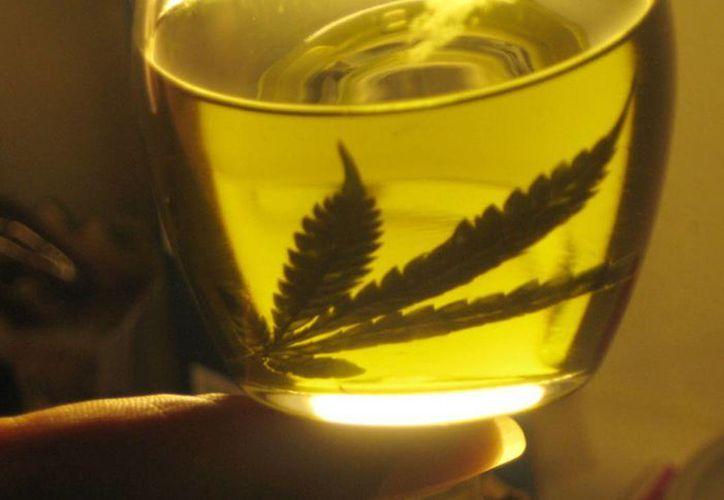 El tratamiento del aceite de marihuana para una paciente con cáncer logró eliminar el dolor neuropático, náuseas, vómitos y falta de apetito. (Archivo/Agencias)