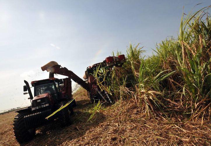 En la imagen, varios obreros en una cosecha de caña de azúcar cerca a La Habana, Cuba. (EFE/Archivo)