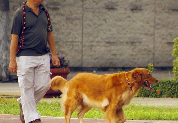 Cada vez hay más espacios en donde los amantes de los animales puede convivir con sus mascotas. (SIPSE)