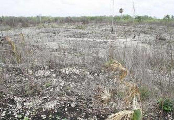La Secretaría de Desarrollo Agropecuario Rural e Indigena, ya prepara un estudio para saber a ciencia cierta cuales son las afectaciones reales. (Redacción/SIPSE)