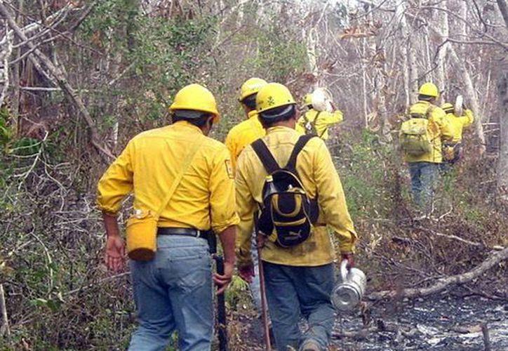 Dependencias de los tres órdenes de gobierno toman provisiones ante la inminente temporada de incendios forestales. (Francisco Sansores/SIPSE)