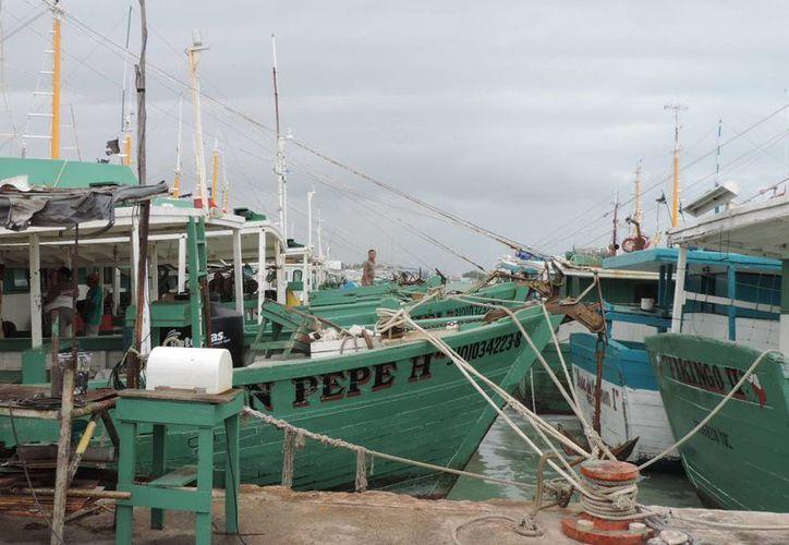 De la pesca de mero dependen más de 14 mil pescadores en Yucatán. (Milenio Novedades)