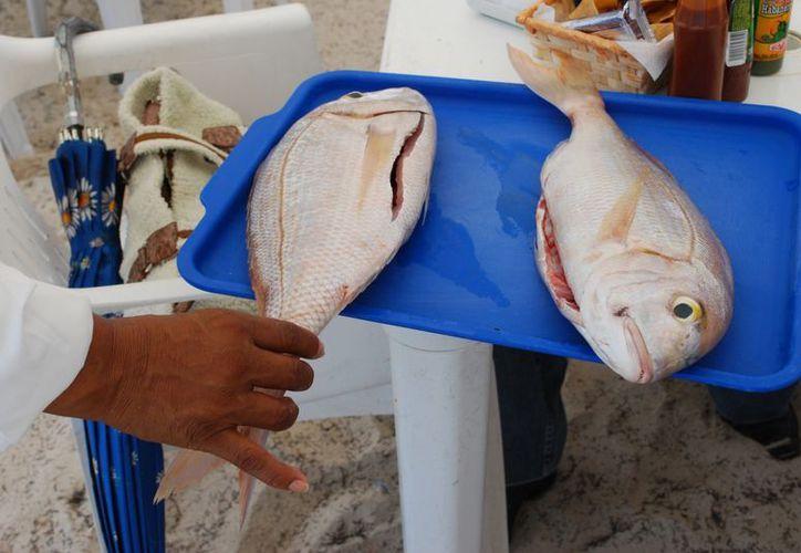 Quintana Roo en el Ramo 8 recibirá 56.5 millones de pesos. (Redacción/SIPSE)