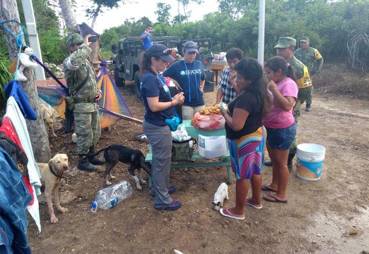 El 22 de junio, un equipo de especialistas estuvo en la comunidad de Chumpón, donde no pudieron cuantificar la cantidad de animales afectados. (Octavio Martínez/ SIPSE)