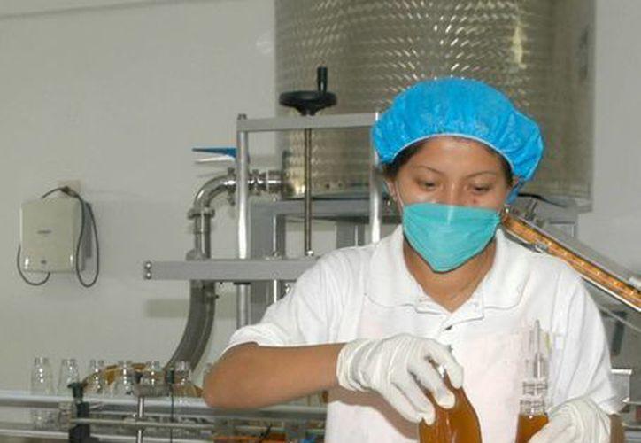 El proceso para producir miel orgánica es difícil y presenta grandes retos, siendo uno de ellos el mantener la inocuidad del producto. (Edgardo Rodríguez/SIPSE)