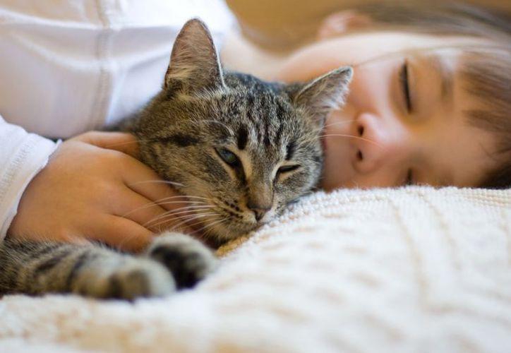 Los felinos fueron domesticados hace 10 mil años. (Foto: Contexto)