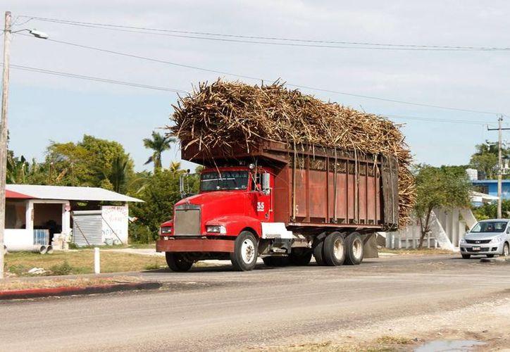Cada conductor transporta alrededor de 25 toneladas de caña hacía el ingenio San Rafael. (Edgardo Rodríguez/SIPSE)