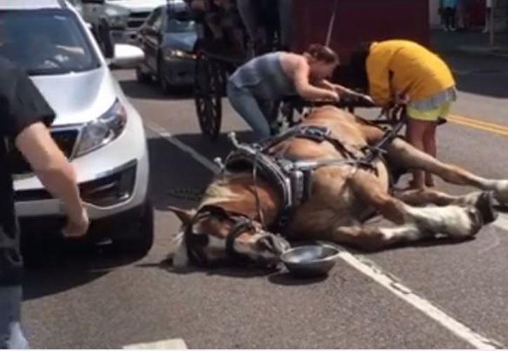 La empresa de los carruajes turísticos negó algún tipo de maltrato animal. (Foto: Internet)
