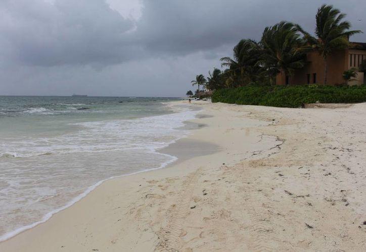 Las playas de la Riviera Maya son las que reciben el número más alto de tortugas. (Luis Ballesteros/SIPSE)