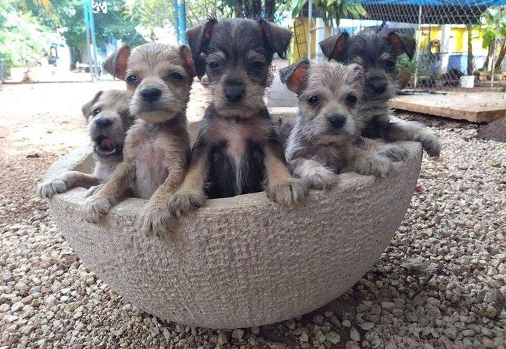 Perritos callejeros en adopción(Foto: Facebook Evolución A.C)