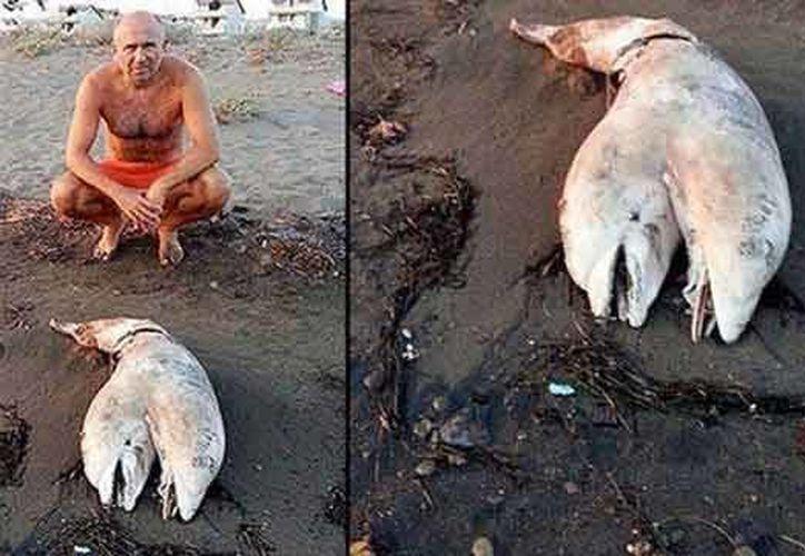 El cetaceo bicéfalo hallado en playas de Turquía. (Foto tomada de: www.aztecanoticias.com)
