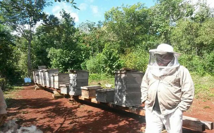 Cada vez que requieren realizar la cosecha de miel, tienen que acudir a otro apicultor. (Benjamín Pat/ SIPSE)